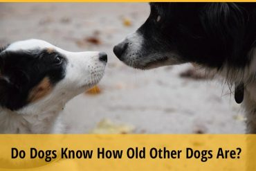 Do Dogs Know How Old Other Dogs Are