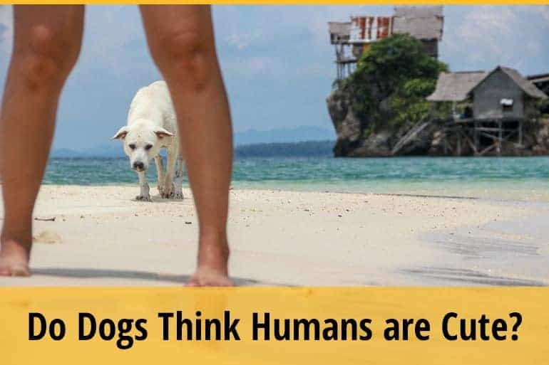 Do Dogs Think Humans are Cute