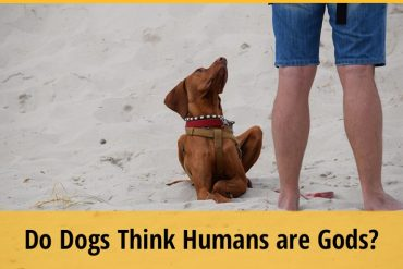Do Dogs Think Humans are Gods