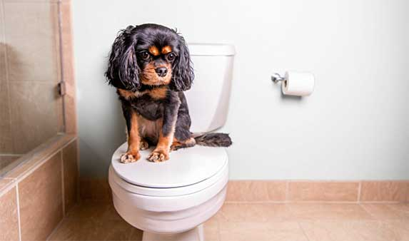 a dog on toilet