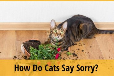 How Do Cats Say Sorry