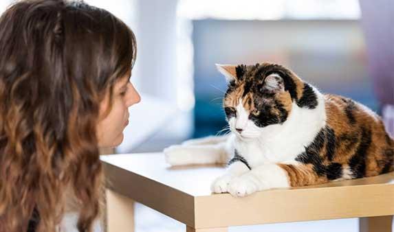 Cat apologizing