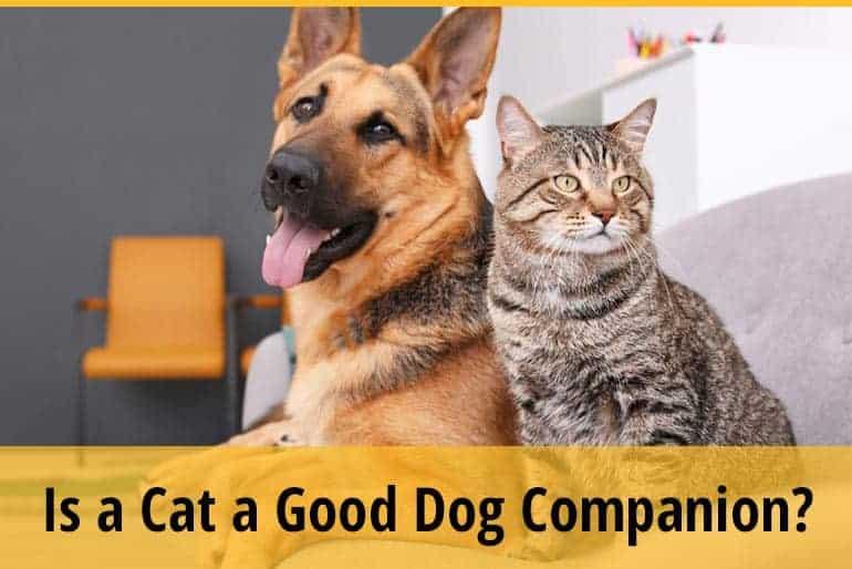 Is a Cat a Good Dog Companion