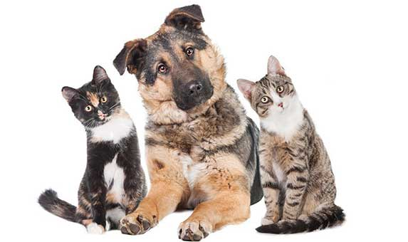 Two cats and a dog