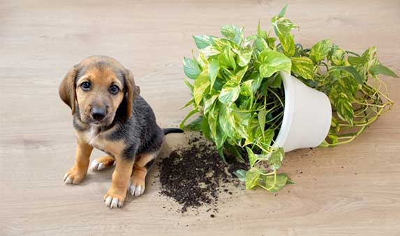 Dog broke a plant vase