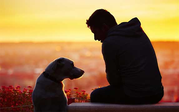 dog and his owner in sunset