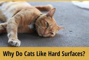 Why Do Cats Like Hard Surfaces