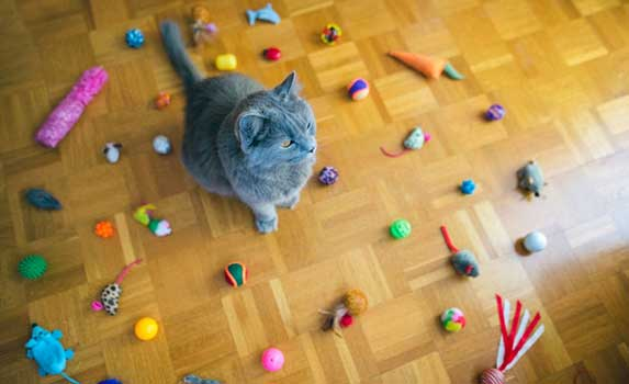 Cat surrounded with toys