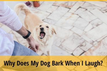 Why Does My Dog Bark When I Laugh