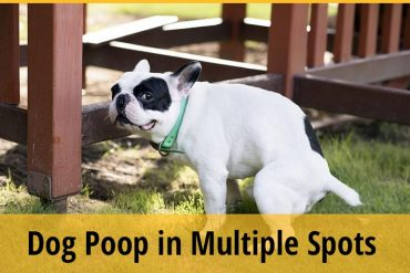 Why Does My Dog Poop in Multiple Spots