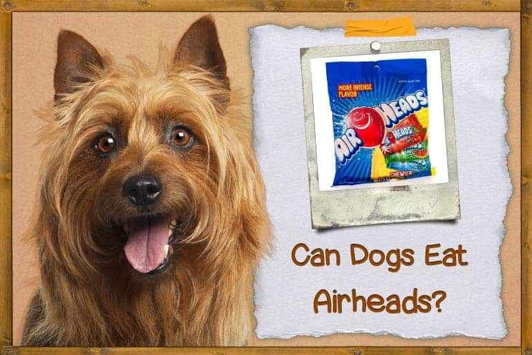 Can Dogs Eat Airheads