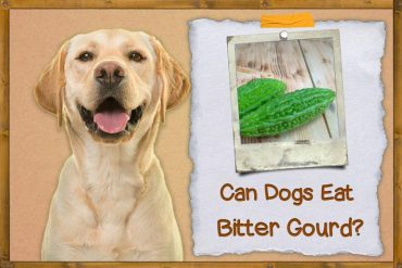Can Dogs Eat Bitter Gourd