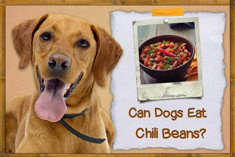 Can Dogs Eat Chili Beans