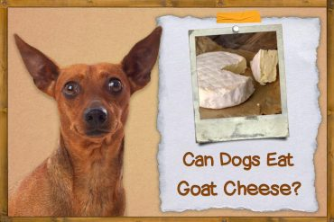 Can Dogs Eat Goat Cheese