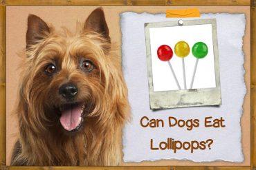 Can Dogs Eat Lollipops