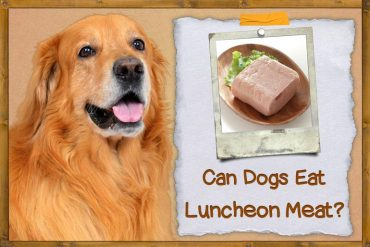 Can Dogs Eat Luncheon Meat