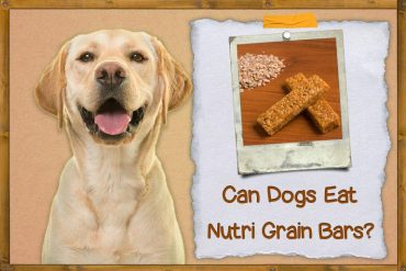 Can Dogs Eat Nutri Grain Bars