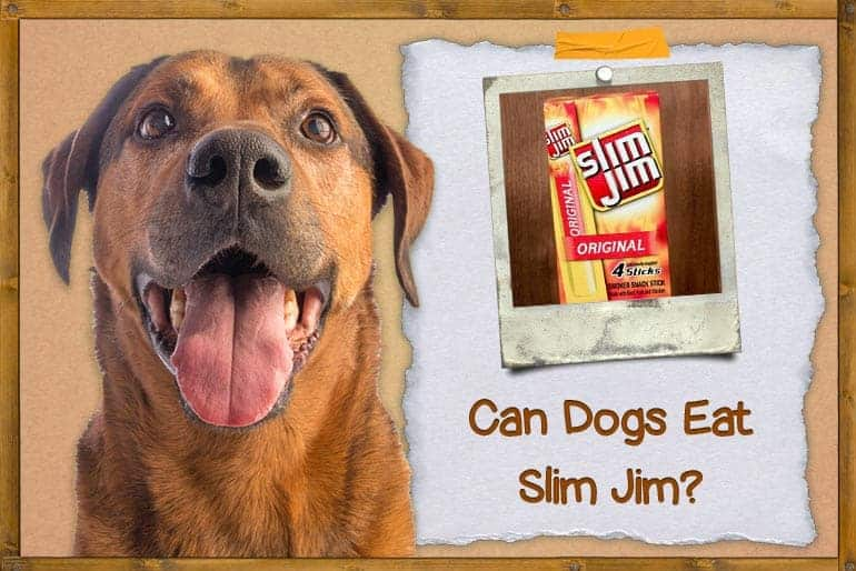 Can Dogs Eat Slim Jims