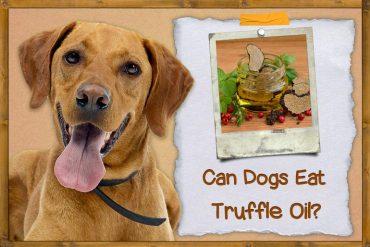 Can Dogs Eat Truffle Oil