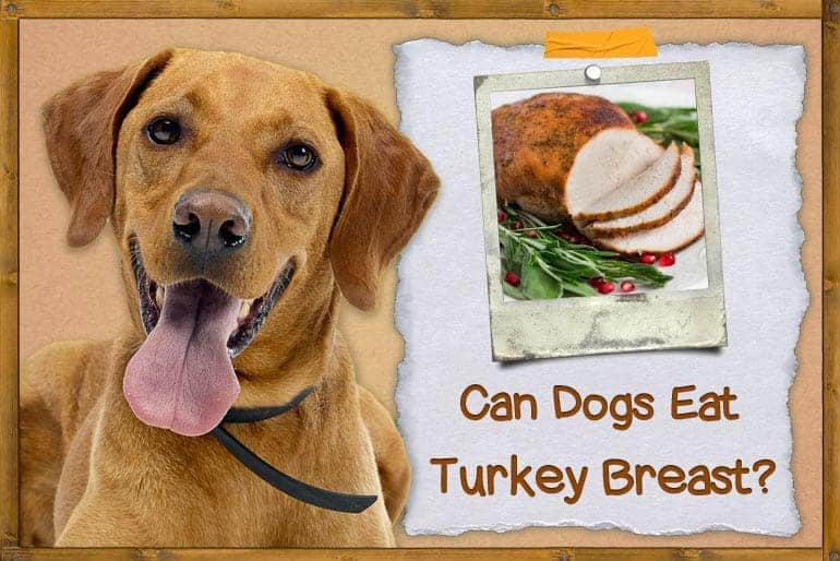 Can Dogs Eat Turkey Breast