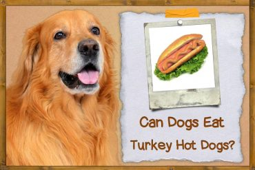 Can Dogs Eat Turkey Hot Dogs