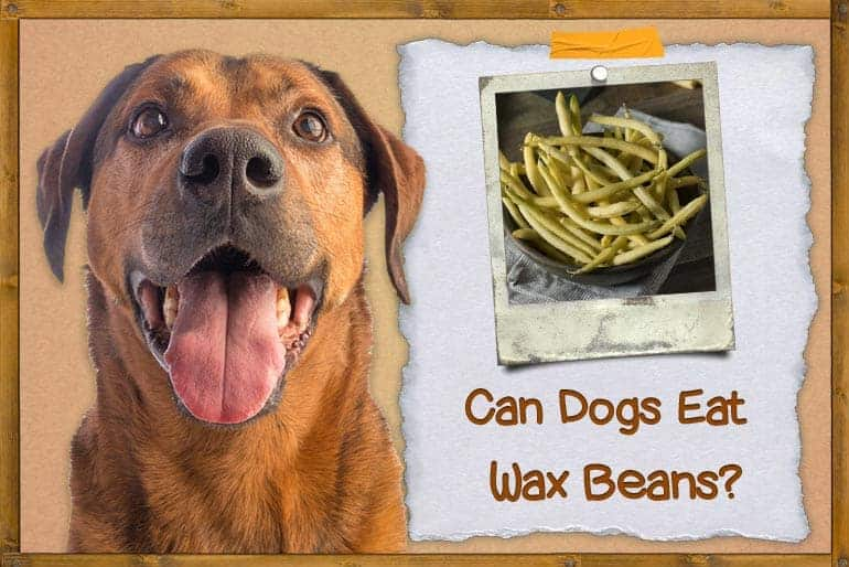 Can Dogs Eat Wax Beans