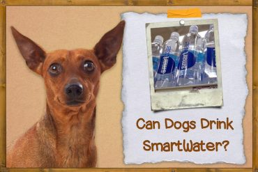 Can Dogs Have SmartWater