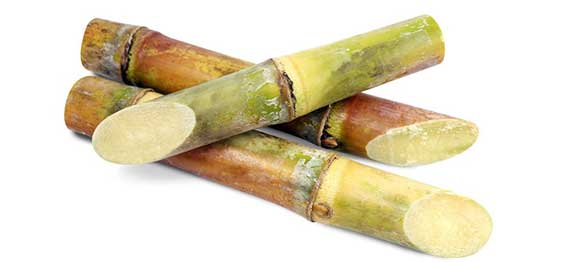 Sugar cane for dogs