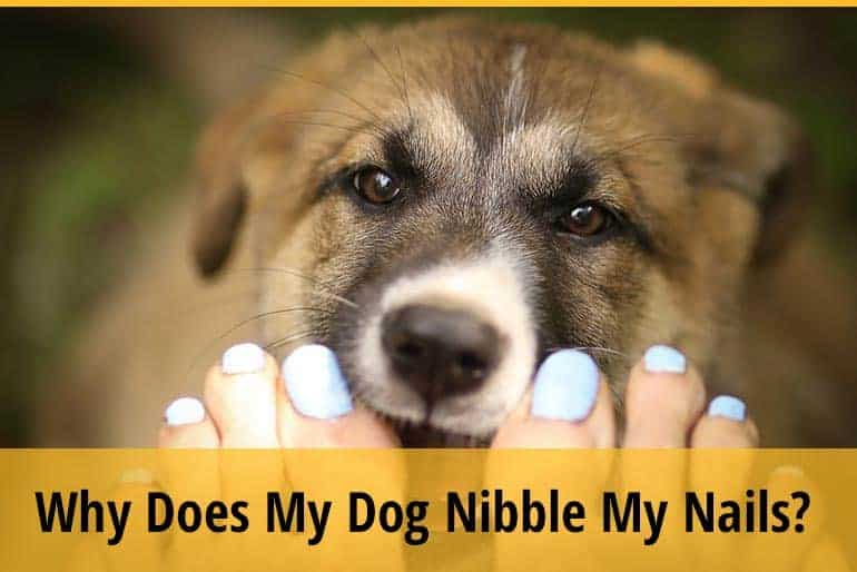 Why Does My Dog Nibble My Nails