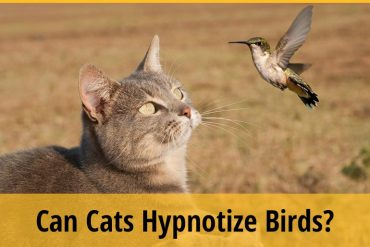 Can Cats Hypnotize Birds