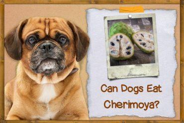 Can Dogs Eat Cherimoya