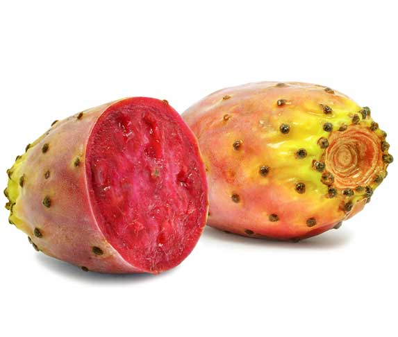 Prickly Pear For Dogs