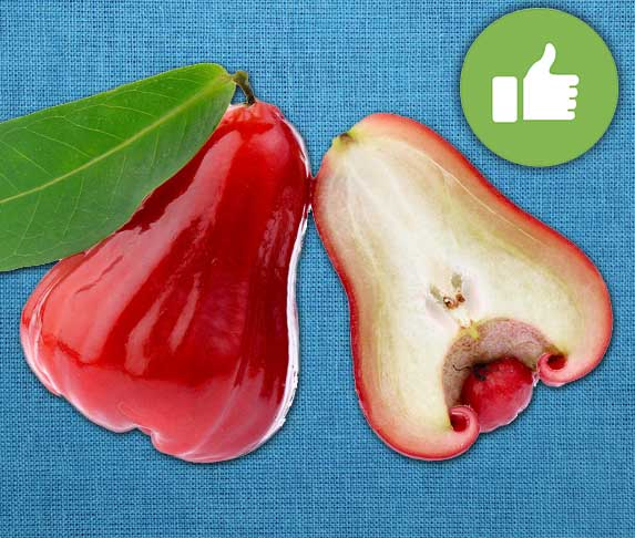 is rose apple safe for dogs to eat