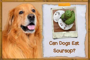 Can Dogs Eat Soursop