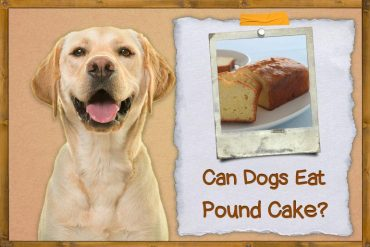Can dogs eat pound cake