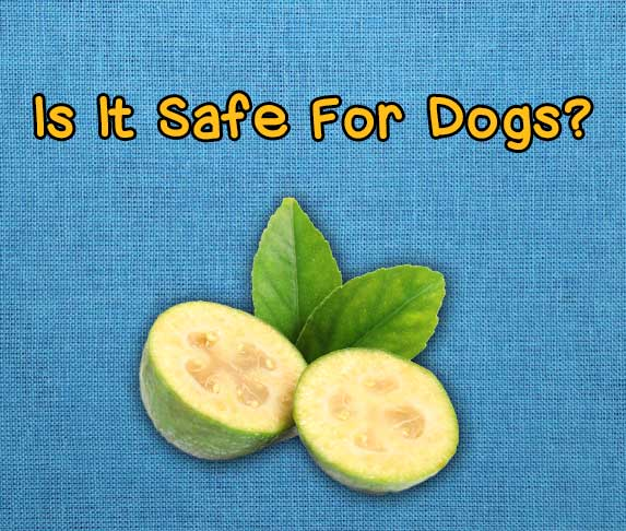 is feijoa safe for dogs