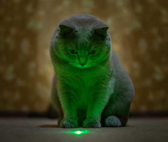 cat staring at laser pointer