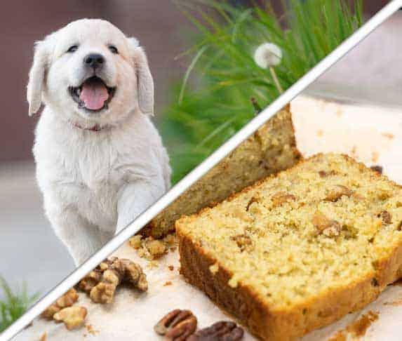 pound cakes as a dog treats