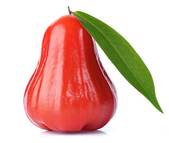 rose apple for dogs