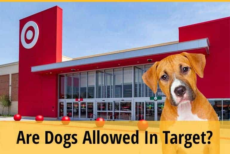 Can I Bring My Dog To Target