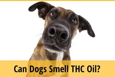 Can Dogs Smell THC Oil?