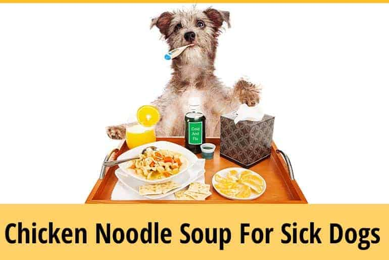 Can Dogs Have Chicken Noodle Soup During Illness