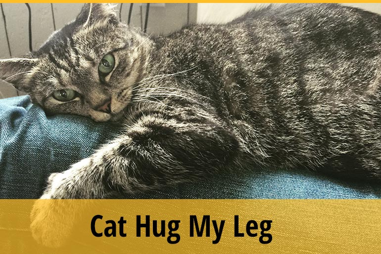 Why Does My Cat Hug My Leg