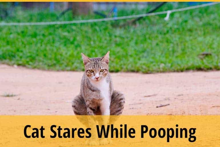 Why Does My Cat Stare at Me When He Poops