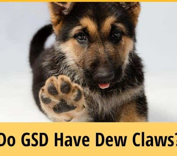 Do German Shepherds Have Dew Claws
