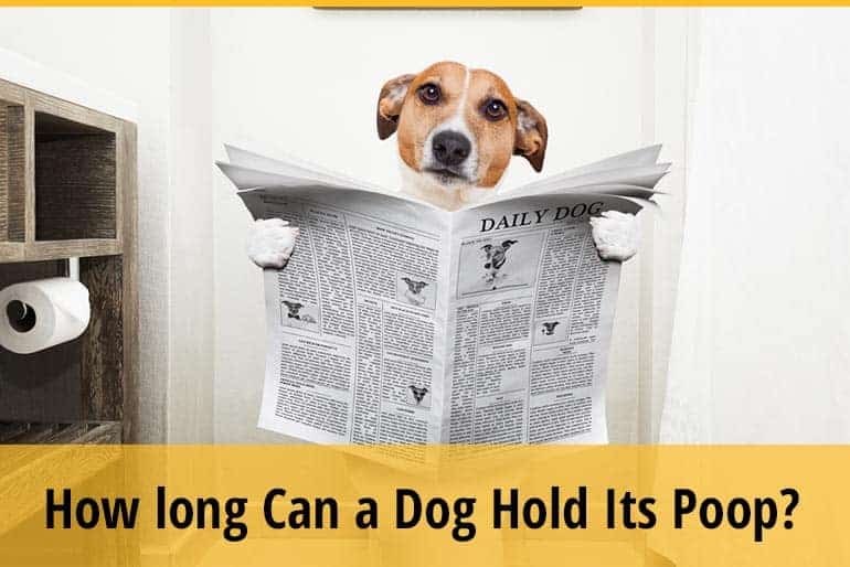 How Long Can A Dog Hold Its Poop