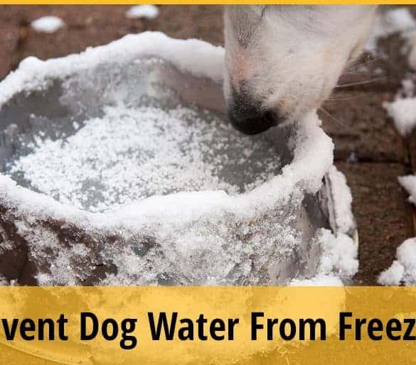 How To Keep Dog Water From Freezing
