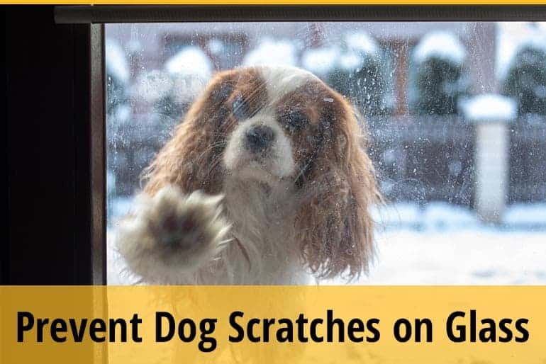 How to Protect Your Glass From Dog Scratches