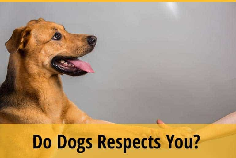 how to tell if your dog respects you