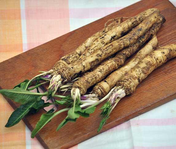 horseradish for dogs